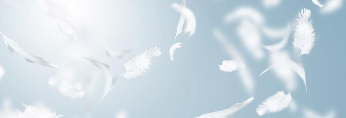 Plume de canard et duvet d'oie qui vole
